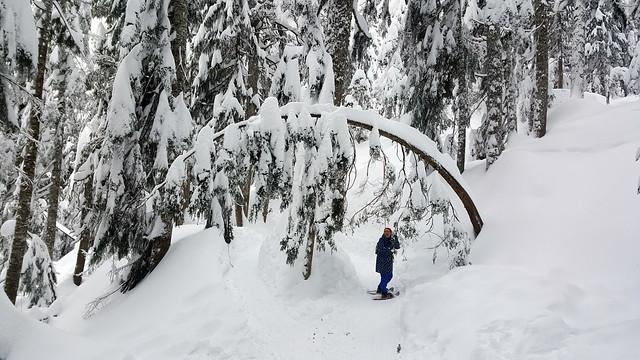 Pulling Trees