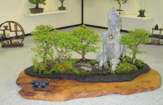 More Bonsai at Gardening Scotland