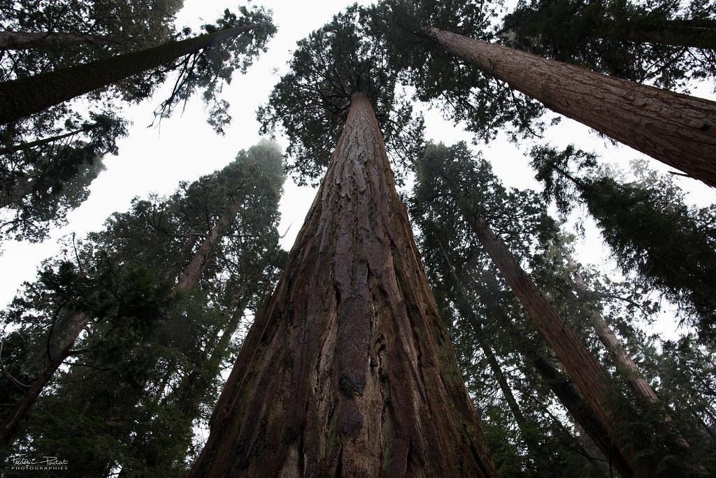 Road Trip - Sequoias