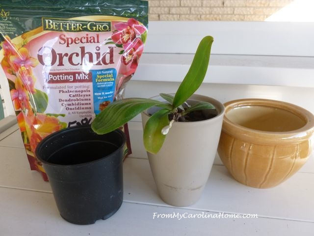 Orchid repotting 1