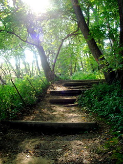 Wooded path by Lake Mendota | by Ann Althouse
