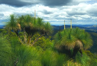 Mt Cabre Bald Grass Trees and Clouds | by kjbeath