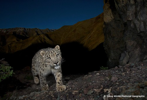 Out of the shadows | by Panthera Cats