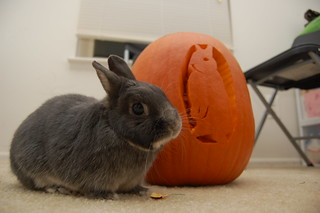 Ronnie Halloween 2010 | by Little Bay Poo