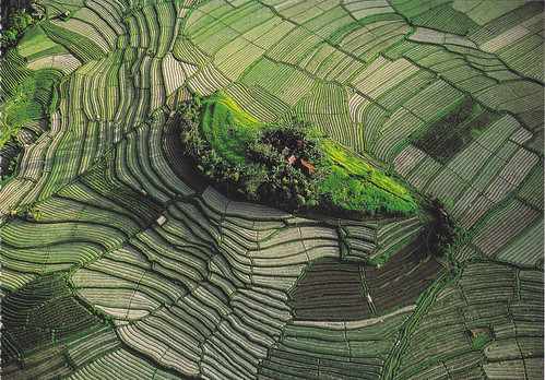 Bali Rice Fields Postcards | by crayolamom