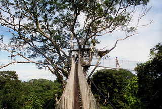 Peru 1999.50 Treetops | by anoldent