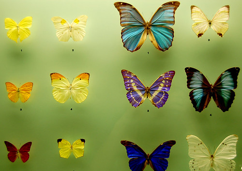 Assorted Butterflies from the Etymology Department | by Curious Expeditions