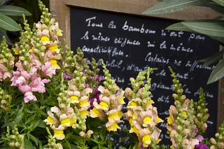 Paris Flower Market | by nichole robertson