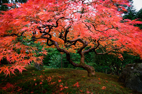 Portland Japanese Garden, Portland OR | by sapper253