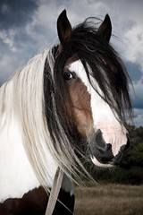 Horse | by Swansea Photographer