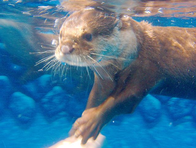 Otters_79