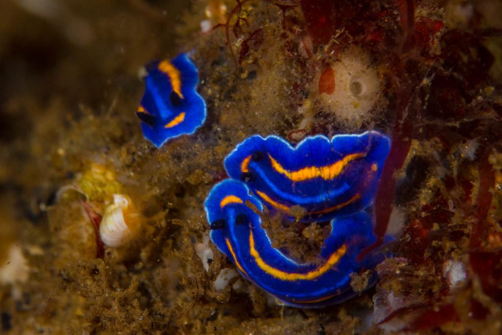 nudibranchSept25-15.jpg