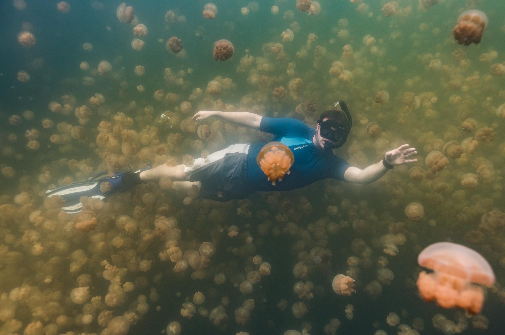 Swimming Jellyfish Lake