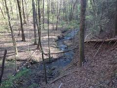 Turner Creek 1