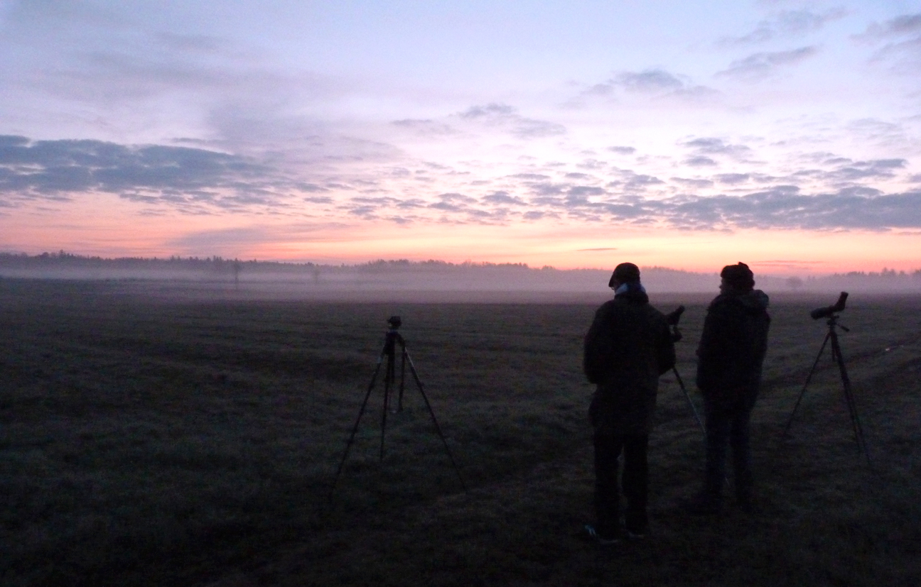 Bialowieza at dawn