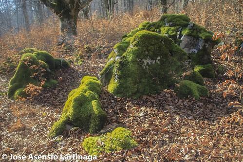 Parque natural de Gorbeia #DePaseoConLarri #Flickr -2796