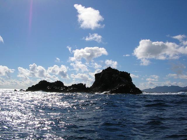 starr-050223-4258-Portulaca_oleracea-habitat-Mokolea_Rock-Oahu