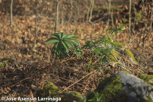 Parque natural de Gorbeia #DePaseoConLarri #Flickr -2793