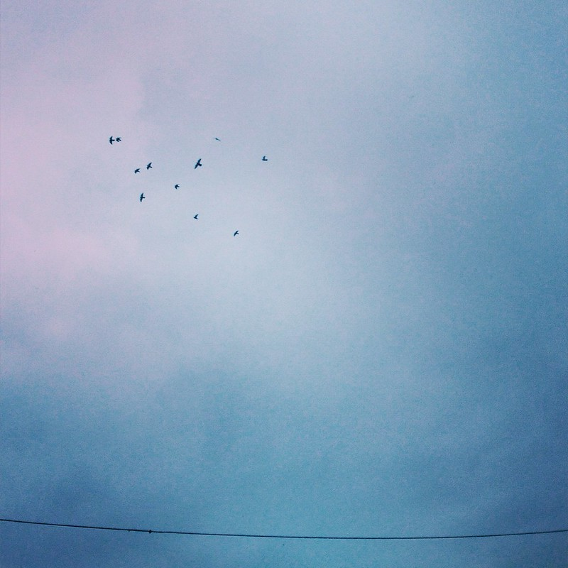 Birds, Slussen