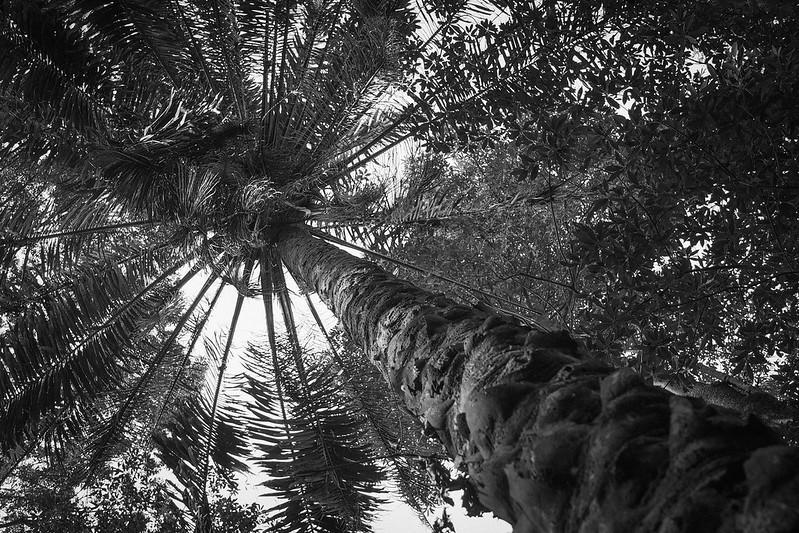 嘉義公園|E-M5MK2 Olympus