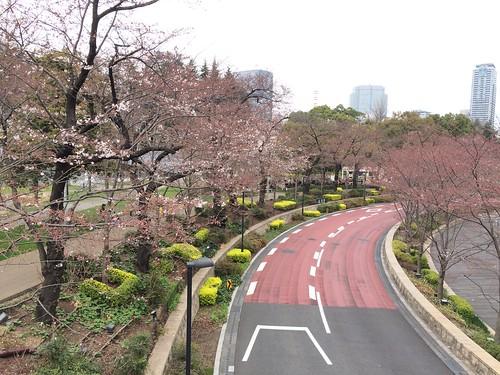 東京ミッドタウンの桜 2016.3.28