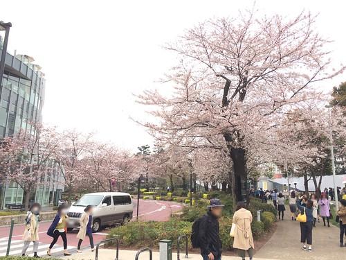 東京ミッドタウンの桜 2016.3.30