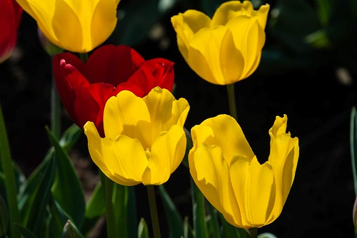 Bright Yellows and Red