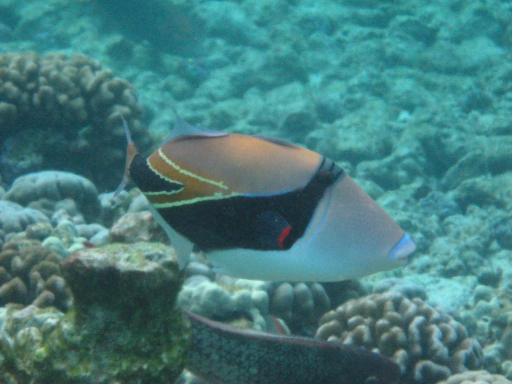 Kahaluu Beach Park Fish