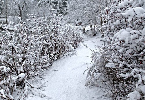 Snow path | by Jennings David L