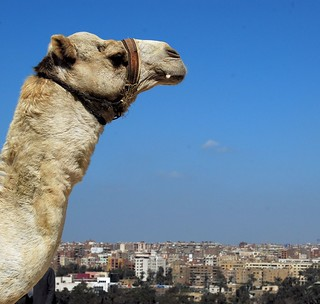 Cairo Skyline - Waiting For The Camel | by Patanne
