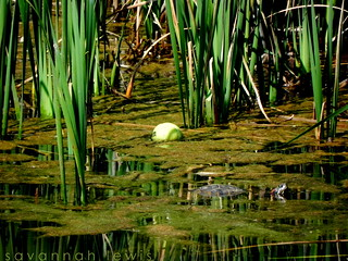 Tennis Ball and a Turtle | by Savannah Lewis