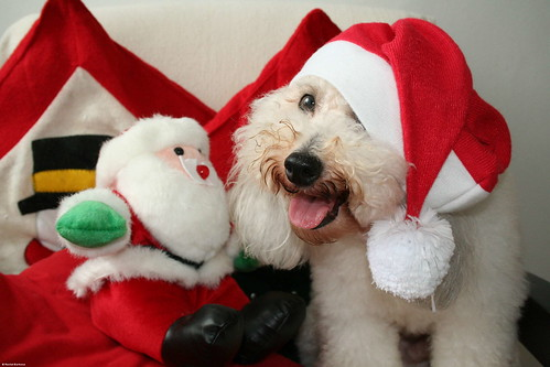 Cão Noel