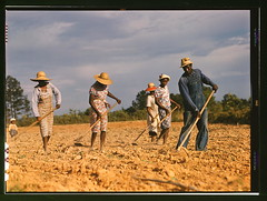 Chopping cotton on rented land near White Plains, Greene County, Ga.  (LOC) | by The Library of Congress