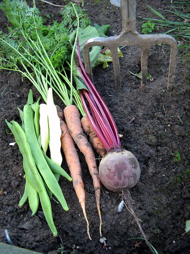 from the vegetable garden | by Shelley & Dave