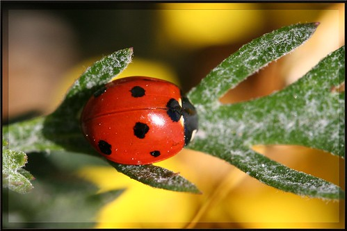 Ladybug in Green | by artonline - Marco Musso