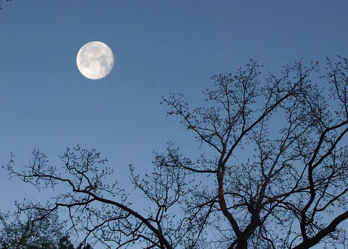 Early Evening Moon | by outsideshot