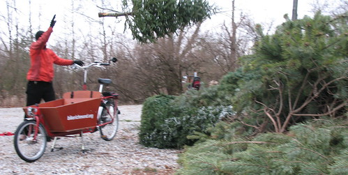Christmas Tree Recycling, by bike, 2007 | by Mark Stosberg