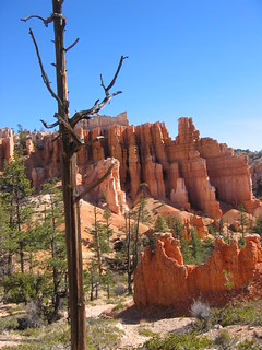 Amazing Bryce - View Along The Trail | by DyeAnnB