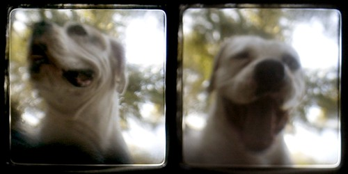 Ann's dogs - Rose, diptych | by ReyGuy