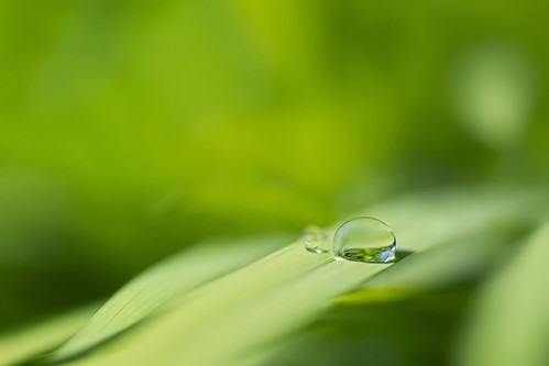 Waterdrop on a leaf | by Clément Livolsi