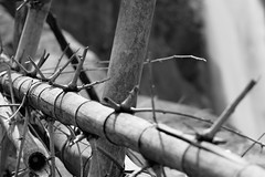 Eco-friendly barbed wire | by mosilager
