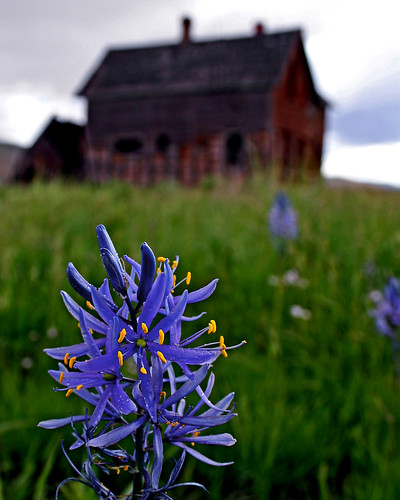 Camas Blossom | by Mountain Mike
