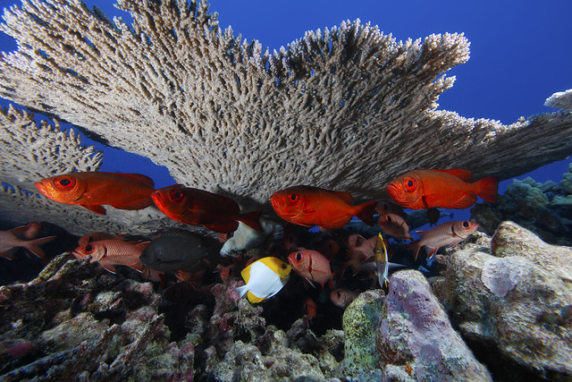photo of  Papahānaumokuākea Marine National Monument