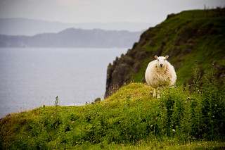 Scotland - Sheep (Isle of Skye) | by Mathieu Noel