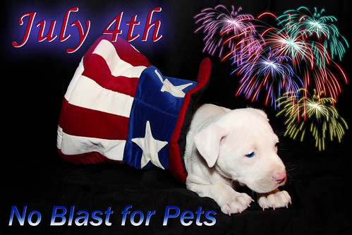 July 4th Fireworks, NO Blast for Pets, Keep them Safe | by Beverly & Pack
