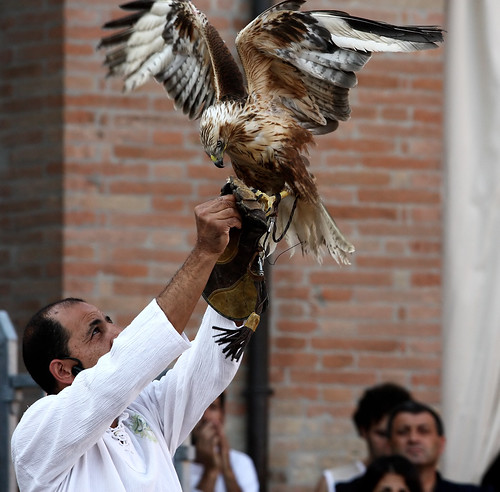 Falconiere falco aquila rapace artigli attacco presa becco volo falconeria  Falconer's hawk eagle hawk talons attack taking flight falconry beak | by zavoli.giuseppe