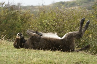 Special Forces Donkeys #5 Playing Dead | by julian sawyer - Purbeck Footprints