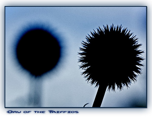 Day of the Triffids | by inky2008.....