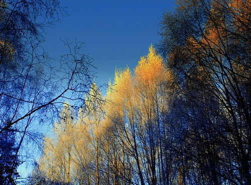 Alaska Anchorage Winter Trees | by MarculescuEugenIancuD5200Alaska
