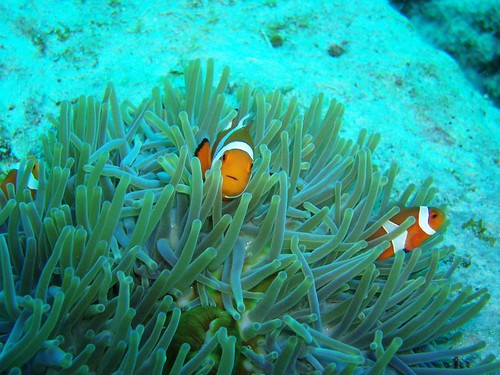 Diving at Kerama Islands - Day 2 | by MollaAliod